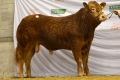 Ardlea Irma sells for €4300 at autumn Premier sale