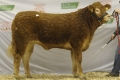 Ardlea El tops the female trade at Roscrea Premier sale March 2011.