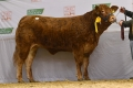 Elite Inga ET sells for €5000 at Premier sale