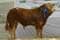 Emerson sons sell well at spring Premier sale