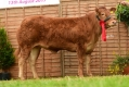 National Limousin Show