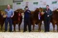Sale topping day for team Ardea at Premier Sale in Roscrea