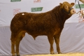 Elite Jason ET tops Premier Sale offering at €6,100