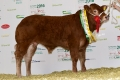 Ardlea Elite leading the lines at ILC National Show